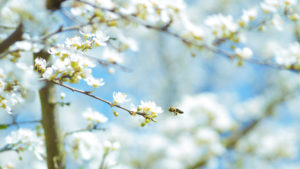 Aktionsbild Frühjahrsputz